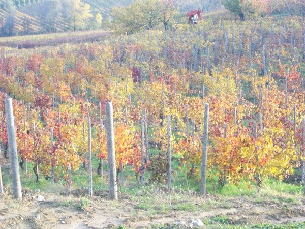 Autunno in val Tidone