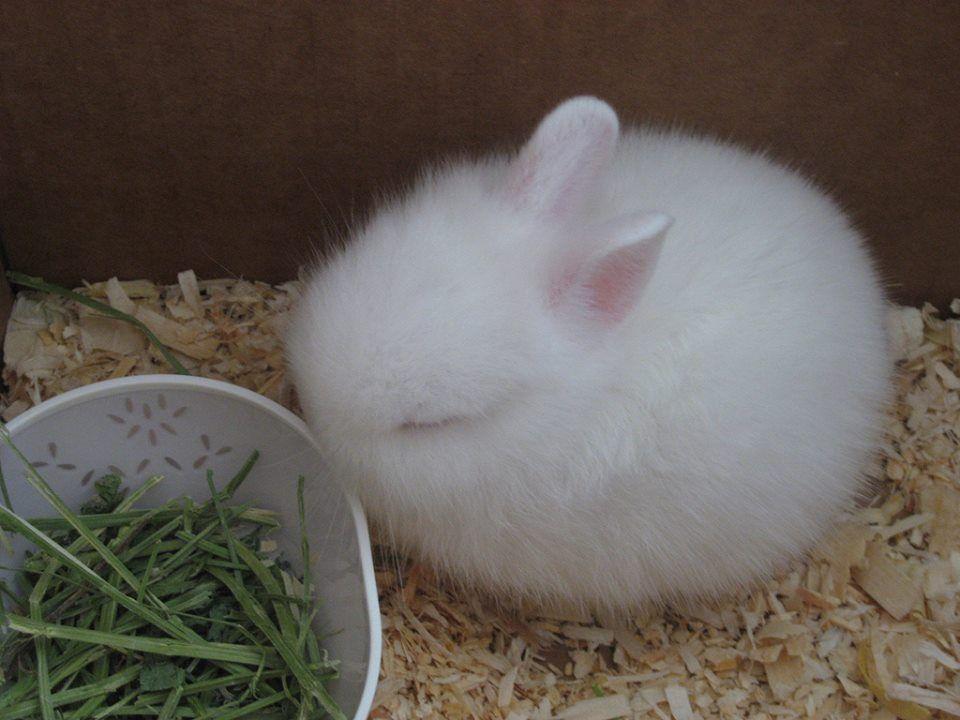 It looks like a Lil fluffball of joy... Or sleepiness....