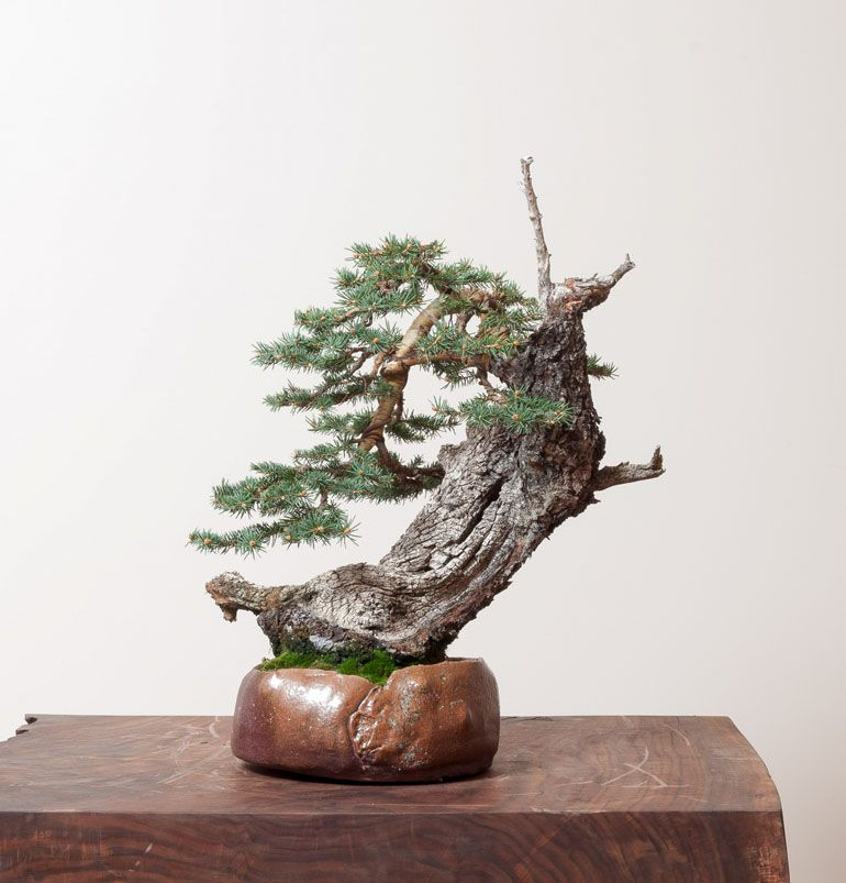Delightful Beyond Dazzling Deadwood | Bonsai Bark
