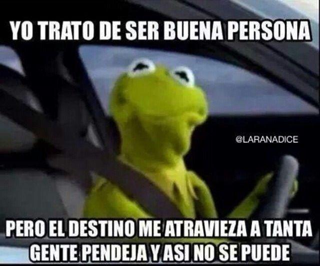 Rana Rene Memes Divertidos Rana Rene Muppets