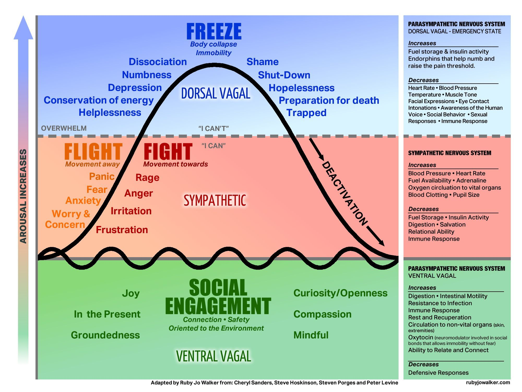 Theory, Fight, Freeze or Engage The autonomic nervous system is a control system that regulates bodily functions, over which we have no control such as the heart rate, digestion, respiratory rate, pupillary response etc. The basi…The autonomic nervous system is a control system that regulates bodily functions, over which we have no c...