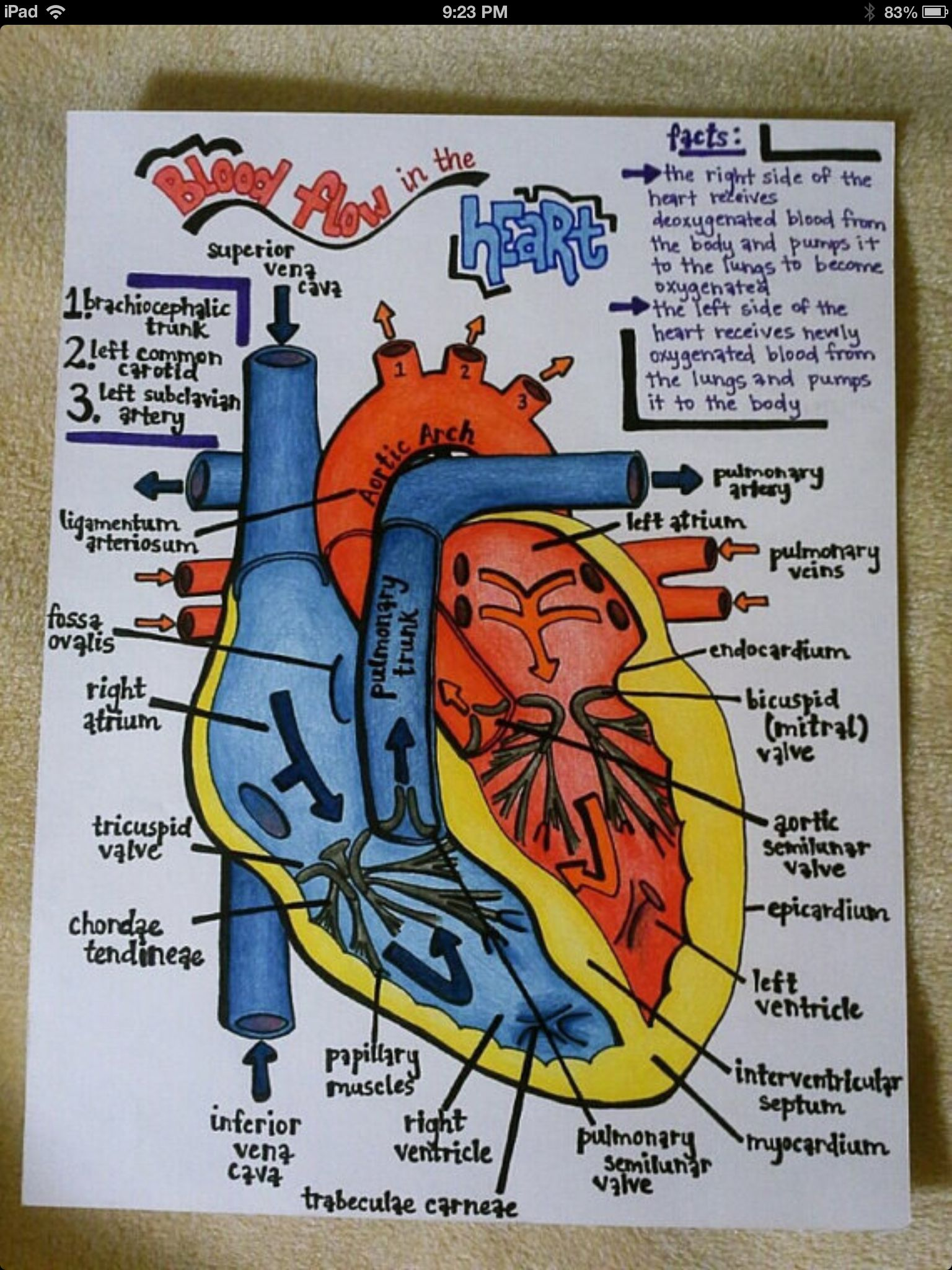 This Item Is Unavailable Etsy Cardiologie Organisation De L Ecole Anatomie Du Corps