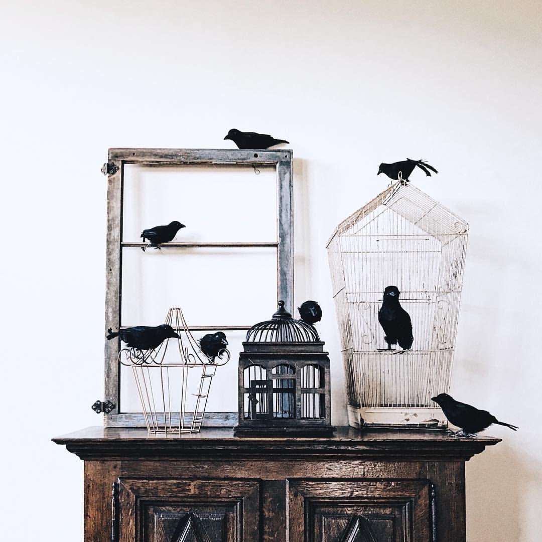 47+ Damb birds information