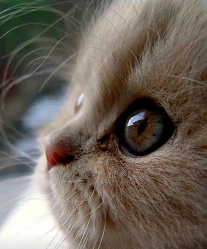 слезы картинки с кошками выпьем наших