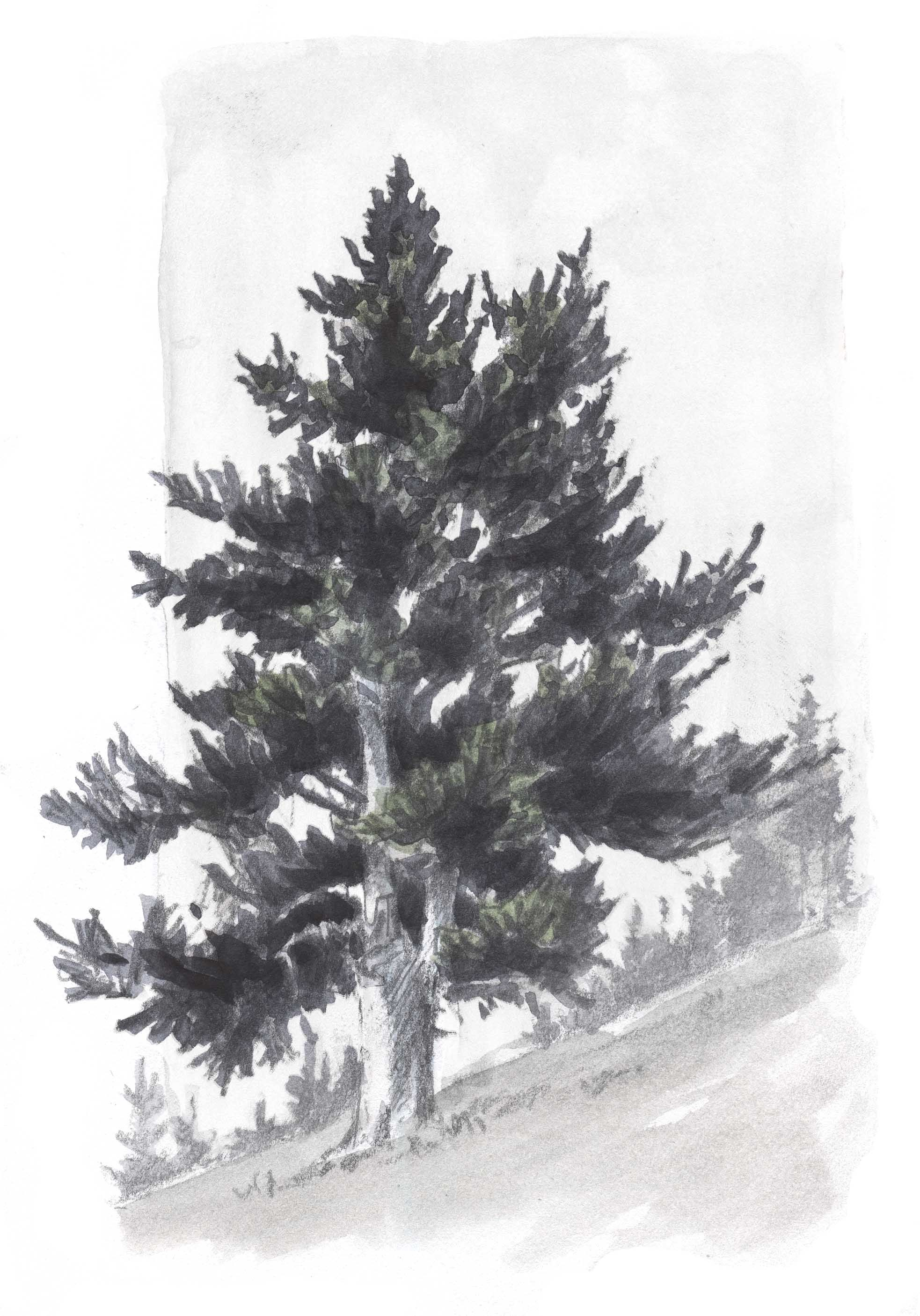 how to draw tree bushes