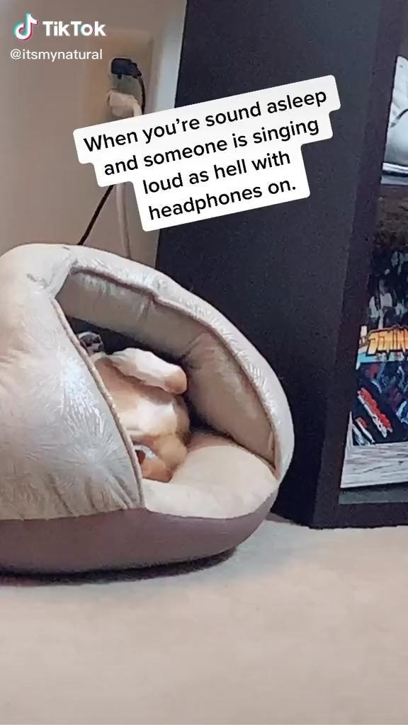 Tik Tok Video Videos Funny Funny Video Memes Funny Dog Videos