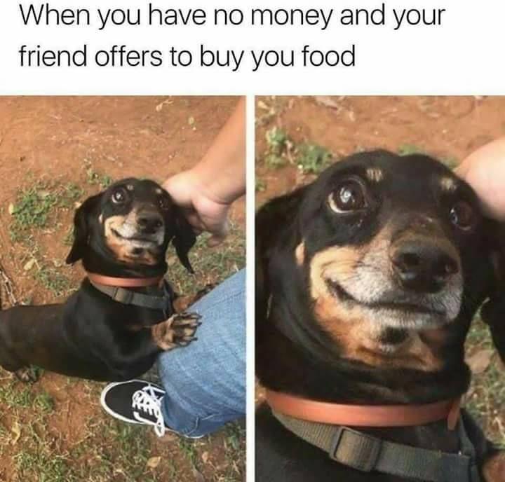83 Fresh Funny Memes Random Pics To Humor Up Your Day In 2020 Funny Dog Memes Funny Animal Memes Funny Relatable Memes