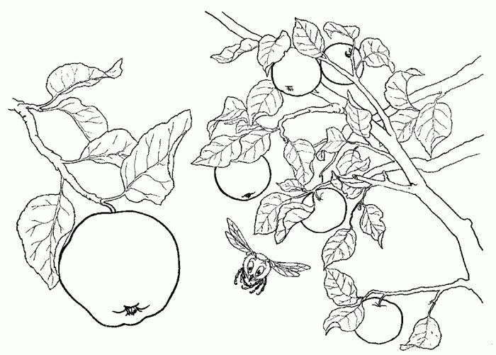 Desenhos para Pano de Prato para Imprimir: 25 Moldes