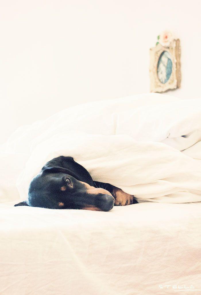 2013-09-stellaharasek-lunathedog-sleepysunday