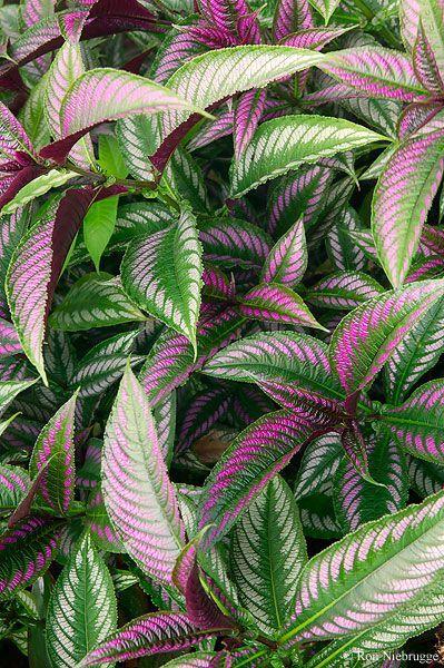 Rainforest Flora Costa Rica Rainforest Plants Rainforest