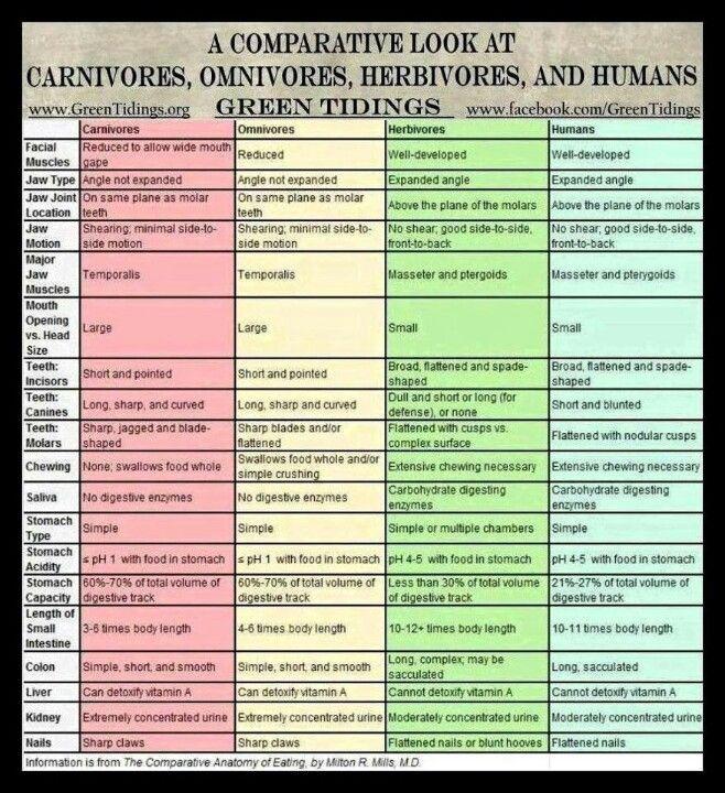 Omnivore human diagram online schematic diagram comparison chart carnivores omnivores herbivores a healthy rh pinterest com venn diagram simple diagram digestive system ccuart Choice Image