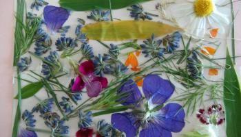 Wie man Blumen perfekt drückt   Homesteading Fähigkeiten
