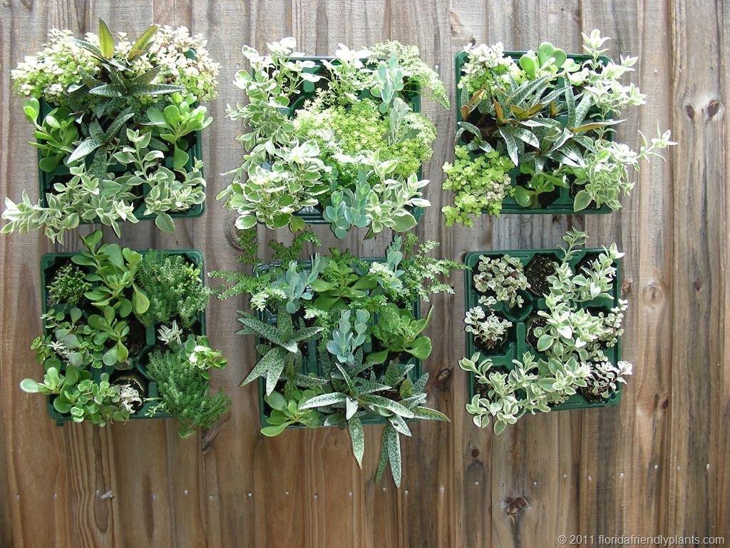 Succulents vertical garden florida friendly plants for Low maintenance outdoor potted plants