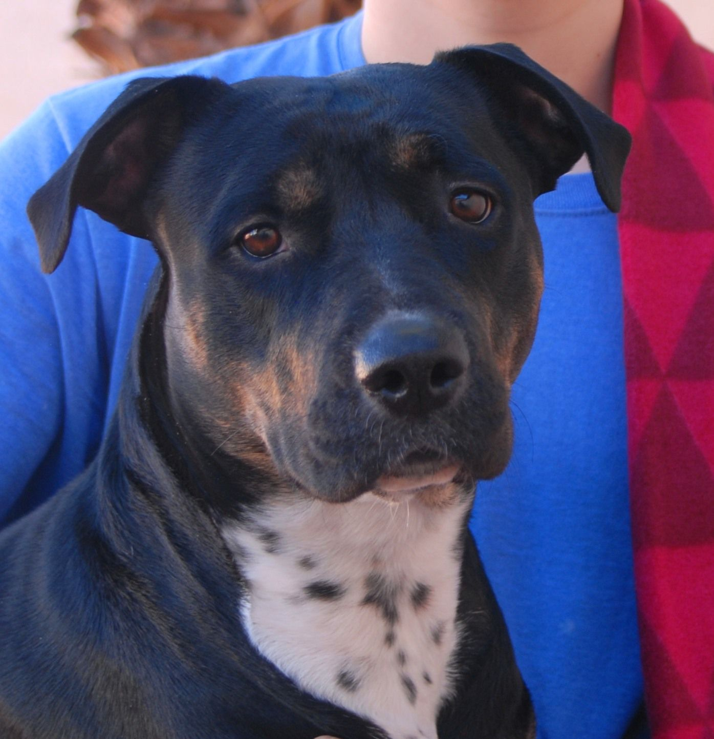 Annie, a young with expressive eyes and new hope for her future: http://nevadaspca.blogspot.com/2014/12/annie.html