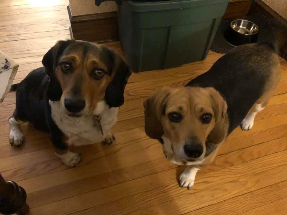 Adopt Piper Porkchop On Petfinder In 2020 Dog Adoption Adoption Help Homeless Pets