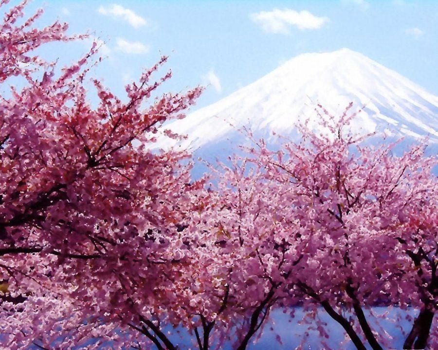 Pin By Virginia On Aesthetics Cherry Blossom Wallpaper Cherry Blossom Japan Cherry Blossom
