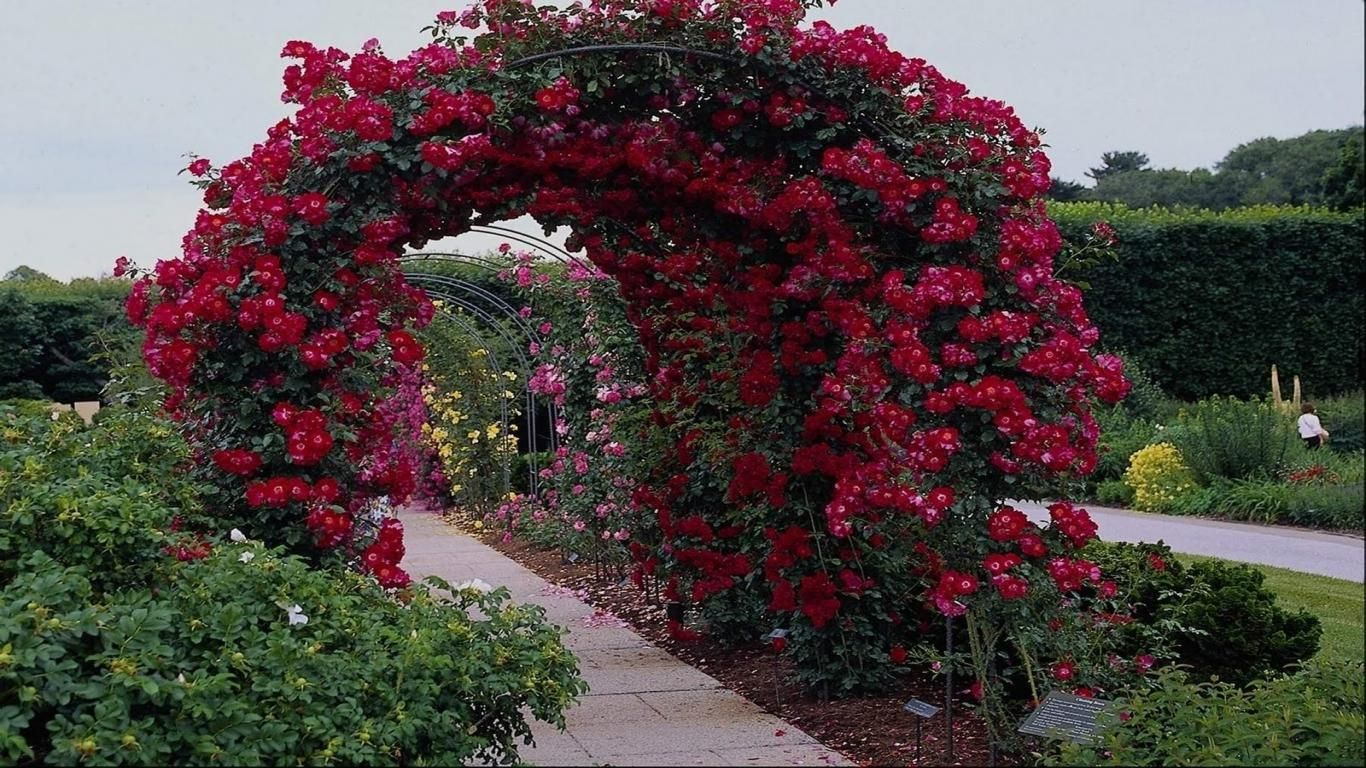 Free Download HD Flower Road Summer Garden Landscape Design Facebook  Timeline Cover Photo   Download FREE