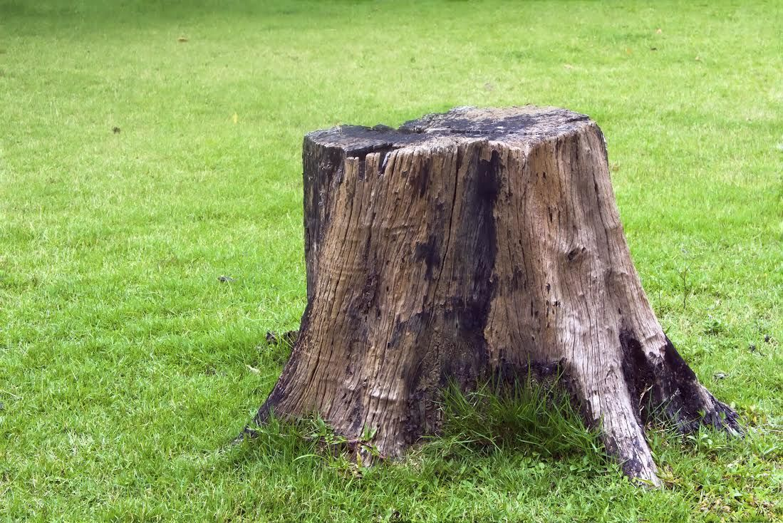 Stump Removal Services In Frederick Stump Removal Kill Tree Roots Tree Stump