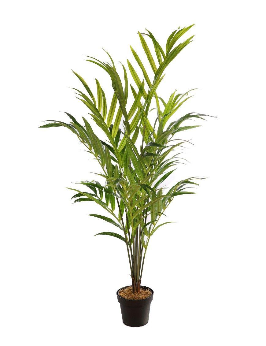 23++ Planta interior tipo palmera trends