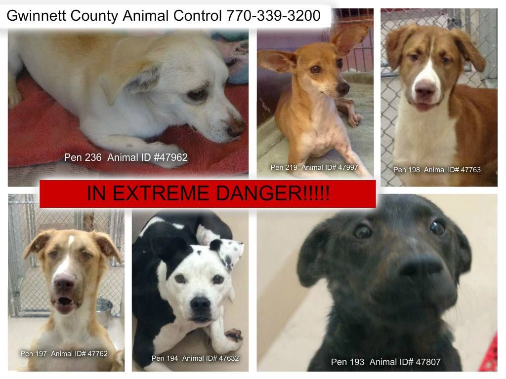 URGENT! These dogs need out of the shelter NOW