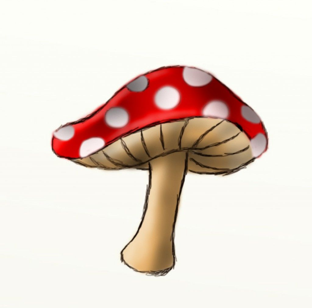 learn how to draw mushrooms