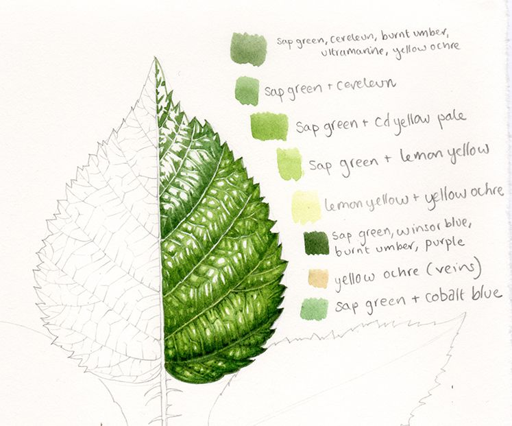 Lizzie Harper Botanical Illustrator On The Step By Step Process