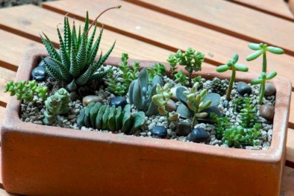 35 Wundervolle Deko Ideen Fur Den Garten Mit Sukkulenten Garten Ideen Sukkulenten Sukkulenten Pflanzen