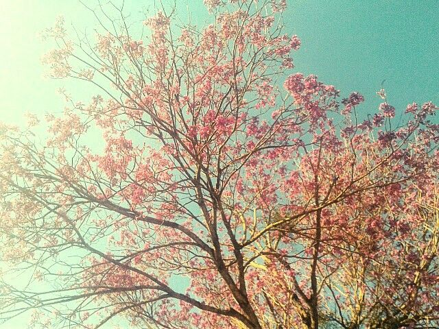 Árvore no Centro de Gravataí