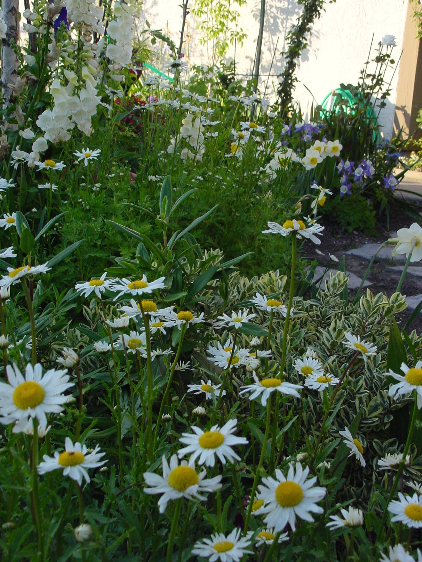 Front yard cottage gardens - My Small Front Yard Cottage Garden