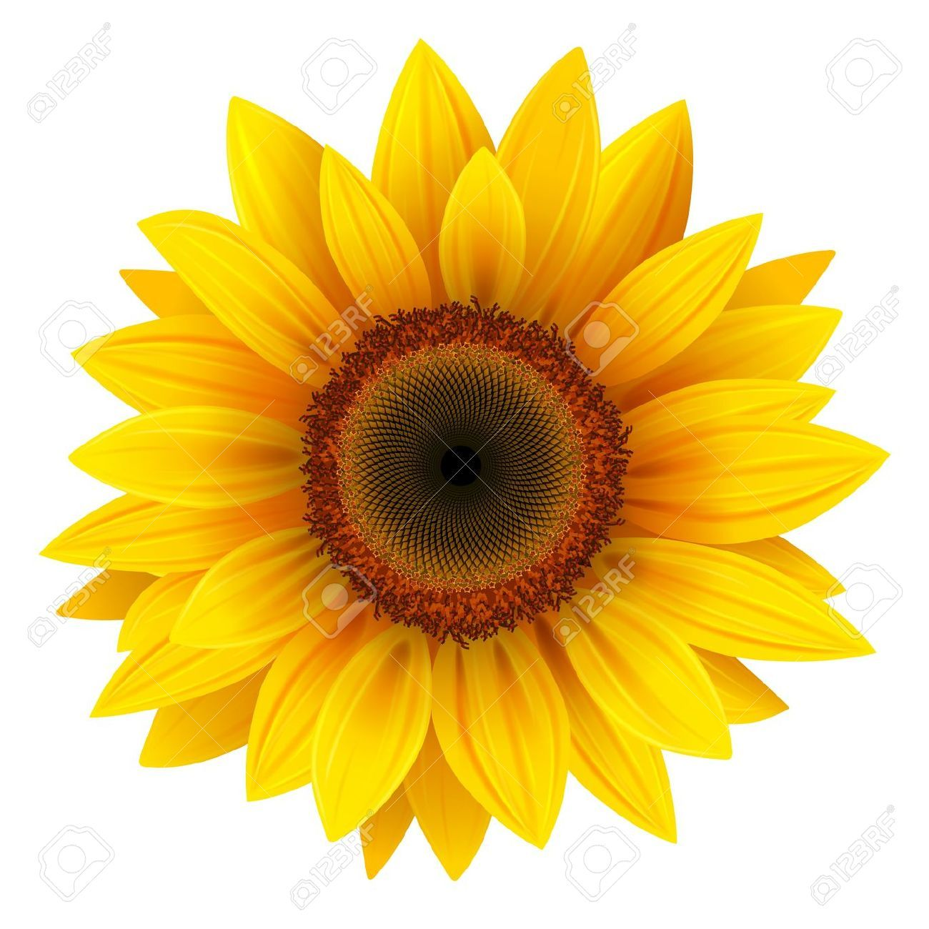 sunflower stock photos  pictures  royalty free sunflower sunflower clip art outline sunflower clipart images
