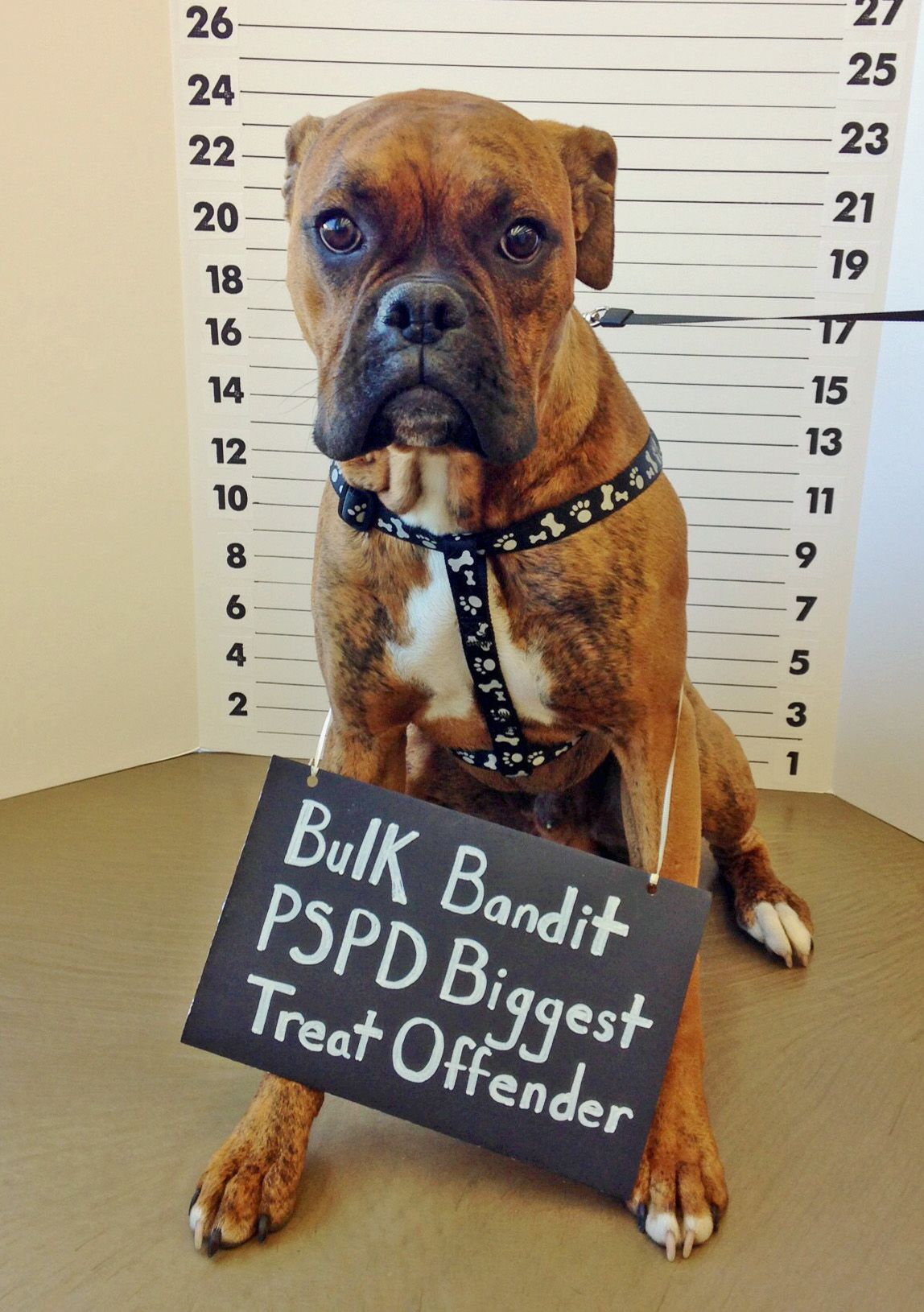 Brady Courtesy Of Neighbor Christina K Pet Supplies Plus Dogs Natural Pet