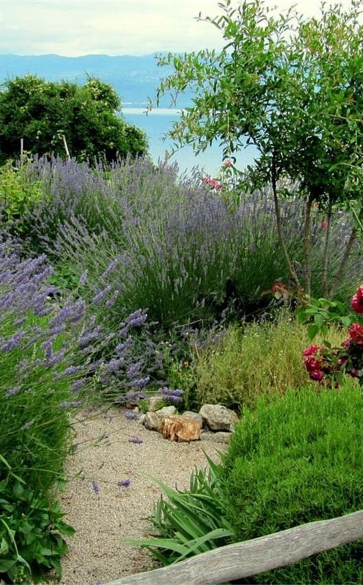 Comment aménager un jardin méditerranéen | Aménager son ...