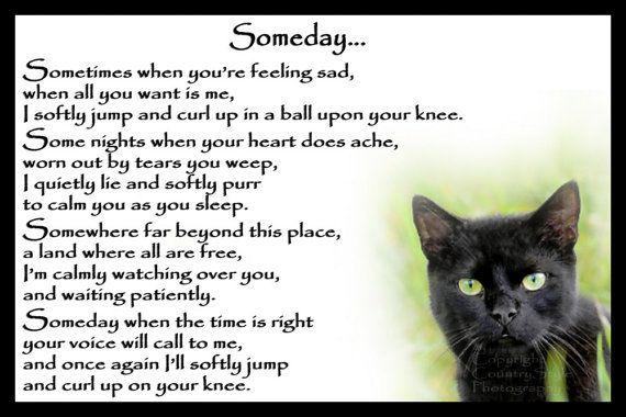 Cat Loss Quotes Beauteous Beautiful Black Cat Memorial Pet Loss Bereavement By Chaffys RIP
