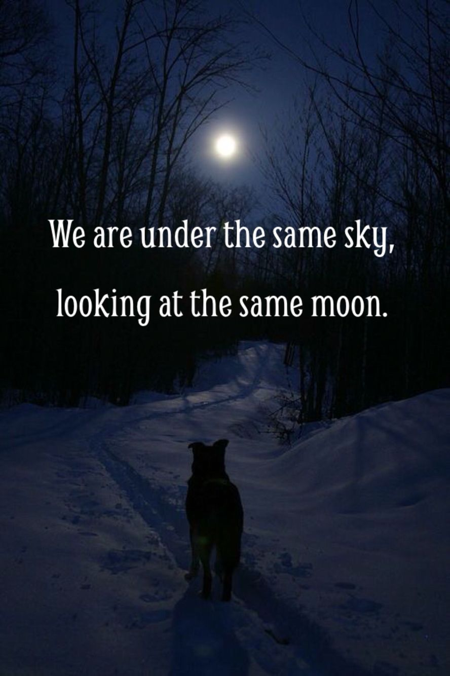 Under The Same Moon Quotes: No Matter Where You Are. Remember That We Are Under The