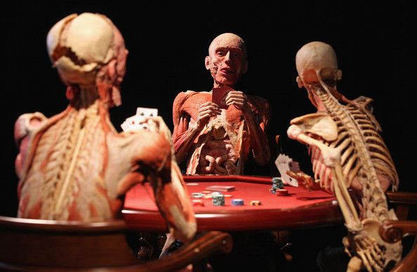Plastinated human corpses posed to look like poker players stand on display at the Body Worlds exhibition on April 27, 2011 in Berlin, Germany. The exhibition, which features human and animal corpses plastinated by Gunther von Hagens, focuses on the role of the heart. It will be open to the public at the Postbahnhof from April 27 to August 14.