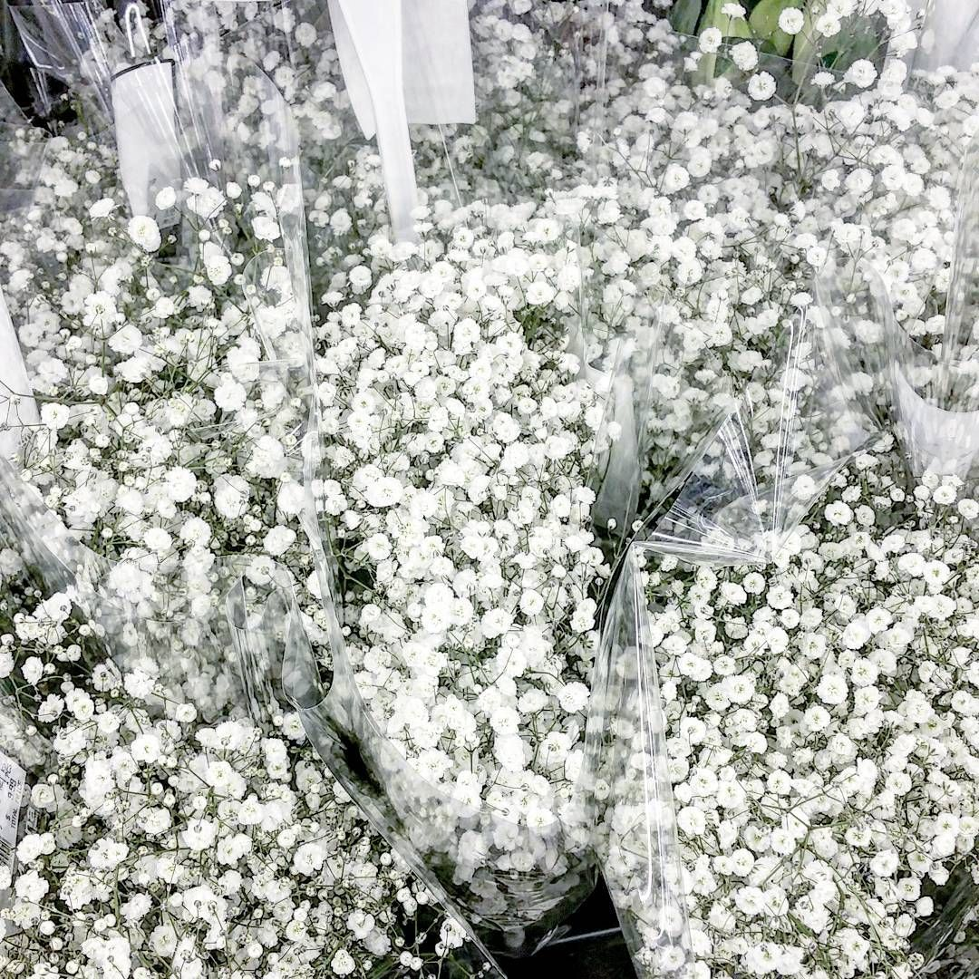 Zousi On Instagram Baby S Breath There S Something About It And The Smell Of Fresh Flowers Hadtob Babys Breath Flowers Babys Breath Babys Breath Bouquet