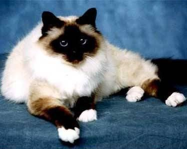 Pin By Shary Colvin On Pets Cute Cats And Kittens Cat Furry Cute Cats