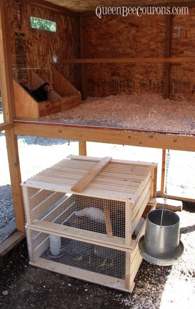 Pin By Queen Bee Coupons On Chickens Coop Design Baby Chickens Coop Building A Chicken Coop Chicken House