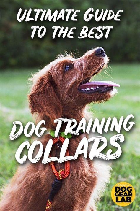 dog training k9, dog training yuba city, dog training