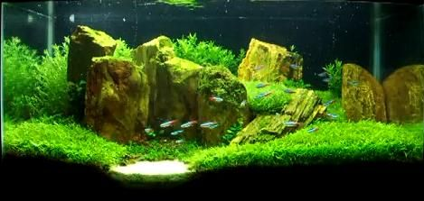 Tropical Fish & Planted Aquariums on Pinterest Aquascaping, Planted ...