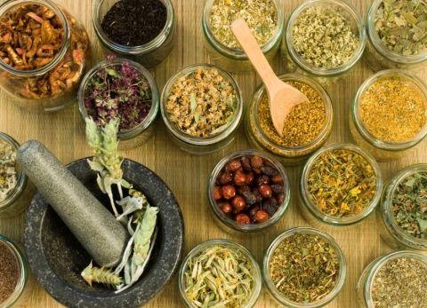 Diabetes - Conheçam 5 plantas medicinais que ajudam a combater