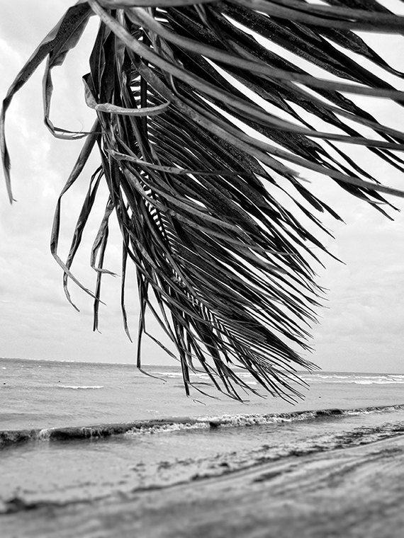 Tropical B&W Photography Everyday is Like Sunday | Etsy