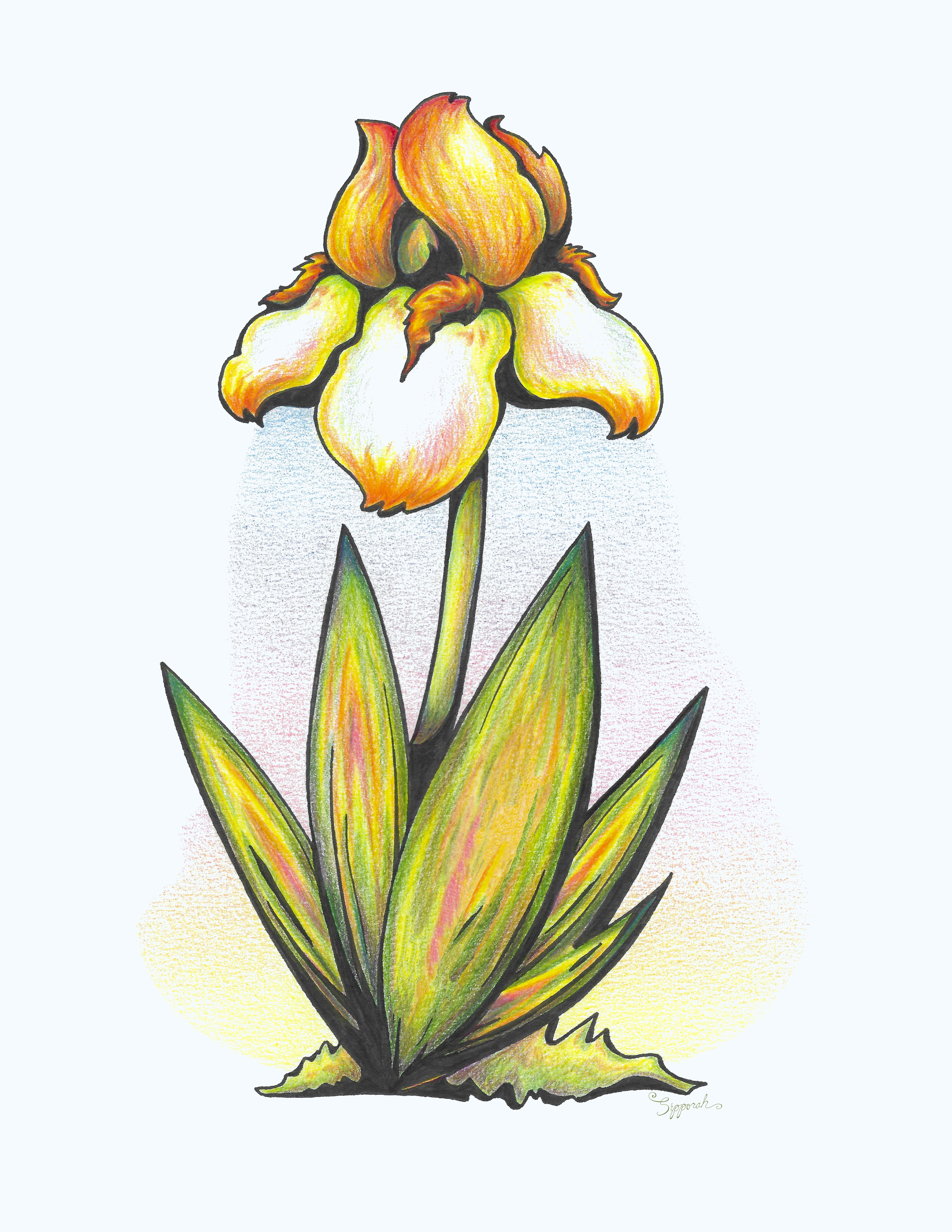 Vibrant Flower 7 Iris By Sipporah Art And Illustration In 2020 Iris Drawing Illustration Art Vibrant Flower