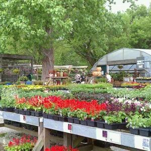 The Growing Place Naperville Il Naperville Il Places Naperville