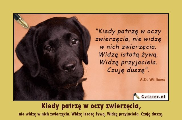 Cytaty O Zwierzętach Cytaty Słodkie Teksty I Sentencje