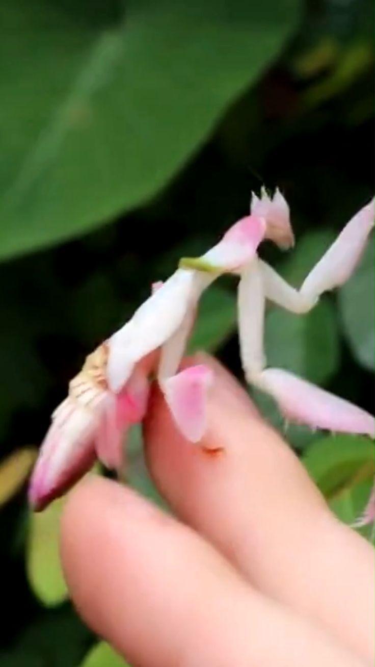 lv nails louis vuitton * lv nails louis vuitton _ lv nails louis vuitton pink
