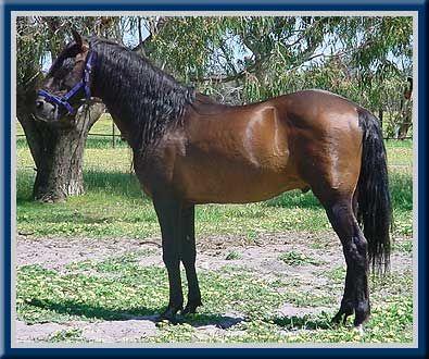 Andalusian Horse Stud Simanda Park Perth Western Australia Andalusian Horse Horses Andalusian