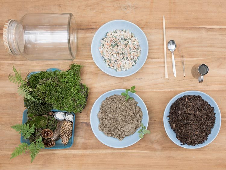 Biotop Anlegen Anleitung. diy-anleitung kleines biotop im glas ...