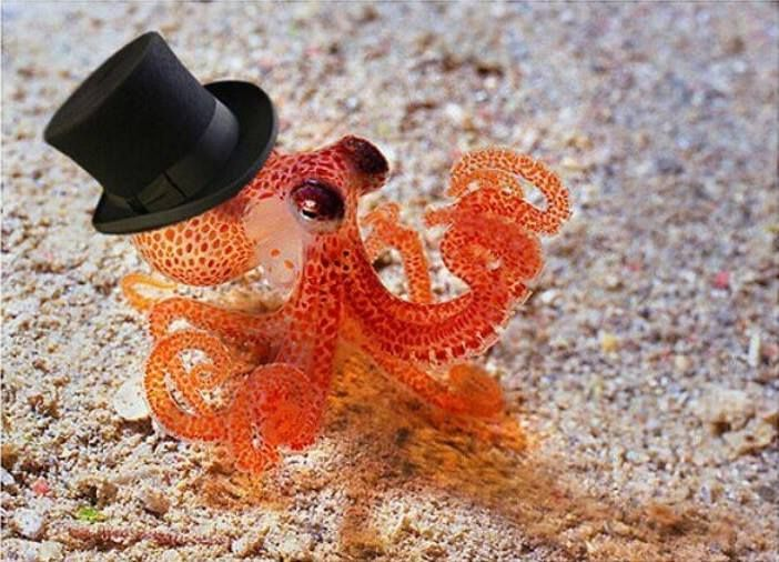 Everything is cuter with a top hat