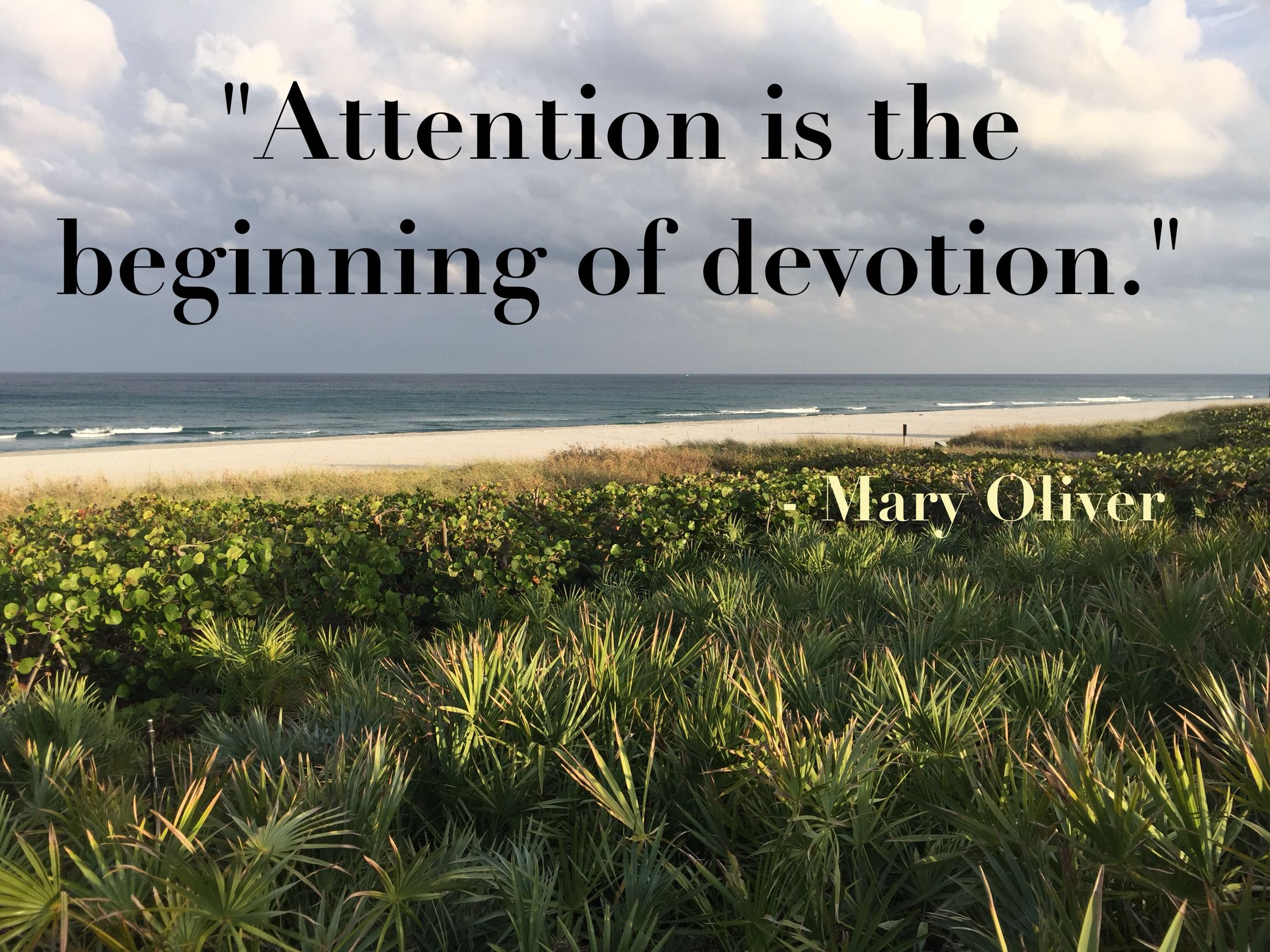 """Devotion Quotes Attention Is The Beginning Of Devotion.""""  Poet Mary Oliver"""